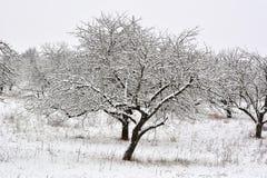 Les arbres d'hiver sur la neige le matin d'hiver images libres de droits