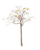 Les arbres d'isolement sur le fond blanc Photo stock