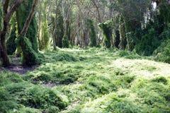Les arbres dans des pots et chairGreen la forêt de marécage Photos stock