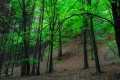 Les arbres dans la forêt images stock