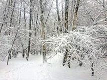 Les arbres dans la forêt couverte de neige Images stock