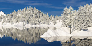 Les arbres dans le gel sur la rivière marchent Photographie stock