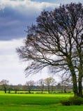Les arbres dans un Yorkshire aménagent en parc sur un fond dramatique de ciel nuageux Copiez l'espace Photos stock