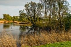 Les arbres de bourgeonnement se sont reflétés dans la surface de l'eau d'un étang naturel photographie stock libre de droits