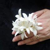Les arbres de liège indiens fleurissent dans la main de deuil de peine Photo stock
