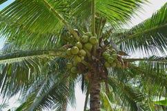 Les arbres de noix de coco sous le jour de soleil Images stock