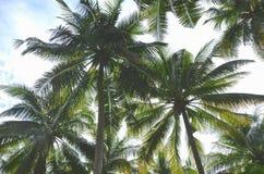 Les arbres de noix de coco sous le jour de soleil image stock