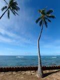 Les arbres de noix de coco accrochent au-dessus des pierres rouges de cylindre le long du Ne de rivage de falaise Images stock