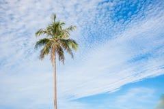 Les arbres de noix de coco dans le bleu de ciel opacifie beau Photo libre de droits
