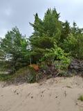 Les arbres de plage de sable de dunes bague la relaxation côtière de voyage de nature images stock