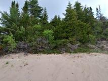 Les arbres de plage de sable de dunes bague la relaxation côtière de voyage de nature photographie stock