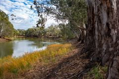 Les arbres de redgum sur les banques de la rivière Murray dans Tooleybuc N Photo stock