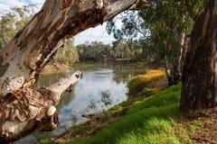Les arbres de redgum sur les banques de la rivière Murray dans Tooleybuc N Image stock