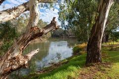 Les arbres de redgum sur les banques de la rivière Murray dans Tooleybuc N Images stock