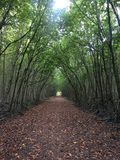 Les arbres de tunnel Image stock