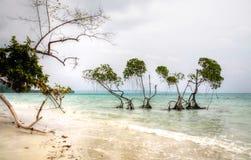 Les arbres Emerald Green de palétuvier arrose la mer d'Andaman le jour brumeux photo stock