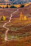 Les arbres en automne Photos libres de droits