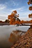 Les arbres en automne Photographie stock