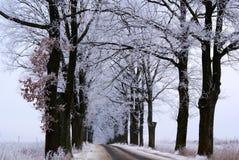 Les arbres en gelée Images libres de droits