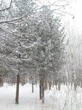 Les arbres en parc, couvert de jour brumeux givré de gel Images stock