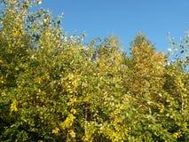 Les arbres et les buissons de nature de soirée de lumière du soleil jaunissent le dessiccateur photos libres de droits