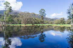 Les arbres et les collines se sont reflétés dans un lac près de Marysville, Australie Images stock
