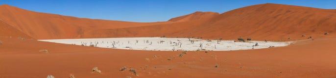 Les arbres et les dunes morts dans un sel filtrent le désert de namib Photo stock