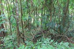 Les arbres forestiers ont encombré beau en nature images stock