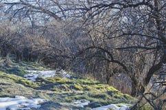 Les arbres forsty froids en parc photo stock