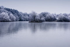 Les arbres givrés de l'hiver aménagent en parc avec la réflexion dans le lac Photos libres de droits