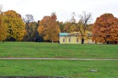 Les arbres jaunes de feuilles et l'herbe verte images libres de droits