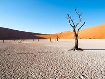 Les arbres morts d'épine de chameau dans Deadvlei sèchent la casserole avec le sol criqué au milieu des dunes rouges de désert de Photo libre de droits