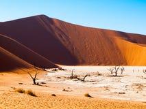 Les arbres morts d'épine de chameau dans Deadvlei sèchent la casserole avec le sol criqué au milieu des dunes rouges de désert de Photographie stock