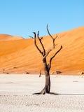 Les arbres morts d'épine de chameau dans Deadvlei sèchent la casserole avec le sol criqué au milieu des dunes rouges de désert de Photos stock