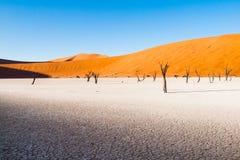 Les arbres morts d'épine de chameau dans Deadvlei sèchent la casserole avec le sol criqué au milieu des dunes rouges de désert de Photo stock