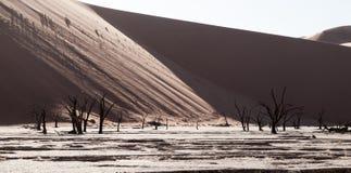 Les arbres morts d'épine de chameau dans Deadvlei sèchent la casserole avec le sol criqué au milieu des dunes rouges de désert de Image libre de droits