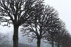Les arbres nus se développent dans une rangée, parc brumeux d'automne Photo libre de droits