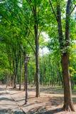 Les arbres ont arrangé dans une ligne dans l'allée en parc Images stock