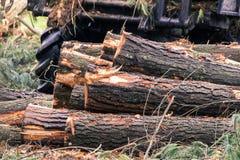 Les arbres ont coupé et ont empilé la notation des arbres photographie stock
