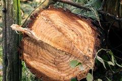 Les arbres ont coupé et ont empilé la notation des arbres photos stock
