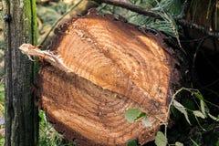 Les arbres ont coupé et ont empilé la notation des arbres images stock