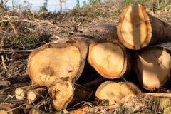 Les arbres ont coupé et ont empilé la notation des arbres image libre de droits