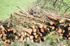 Les arbres ont coupé et ont empilé la notation des arbres images libres de droits