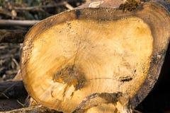 Les arbres ont coupé et ont empilé la notation des arbres image stock