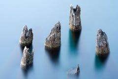 Les arbres ont submergé dans l'eau Image stock