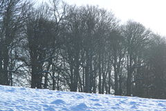 Les arbres pendant l'hiver neigent au parc de Levens, Cumbria Photographie stock libre de droits