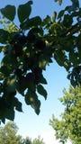 Les arbres poussent des feuilles image photo stock