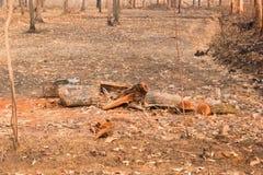 les arbres réduits dans le bois il y avait seulement des parties de troncs photographie stock libre de droits