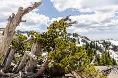 Les arbres roussis le long de la traînée vers Lassen font une pointe photos libres de droits