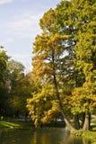 Les arbres s'approchent de l'eau image libre de droits